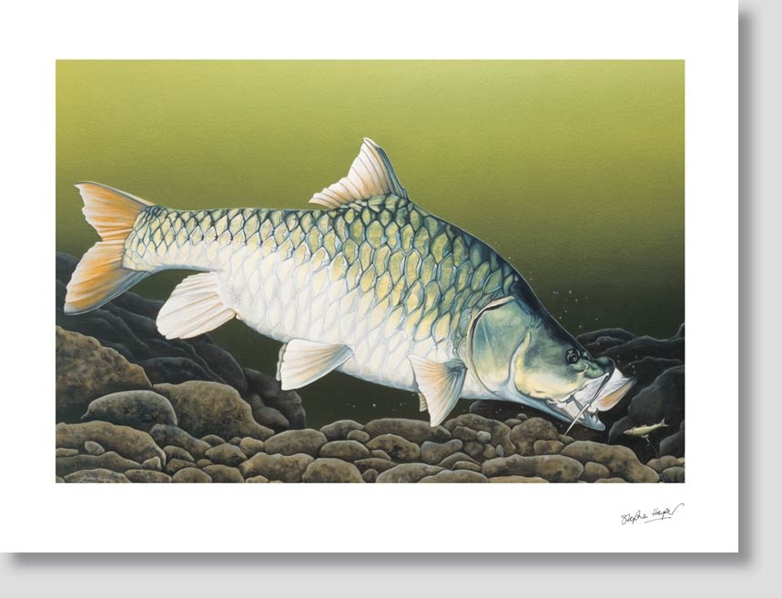 the-might-mahseer